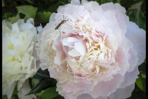 Les fleurs de mon jardin_14