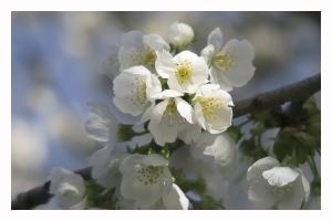 Les fleurs de mon jardin_2