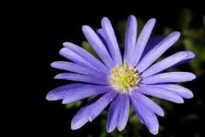 Les fleurs de mon jardin_4