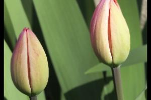 Les fleurs de mon jardin_5