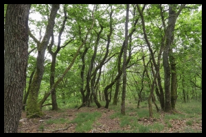 Promenons-nous dans les bois_2